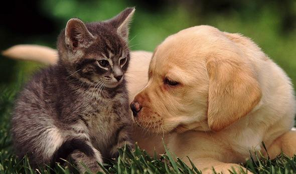 """""""Кто любит кошек, тот не любит людей"""", – мнение популярного блоггера"""