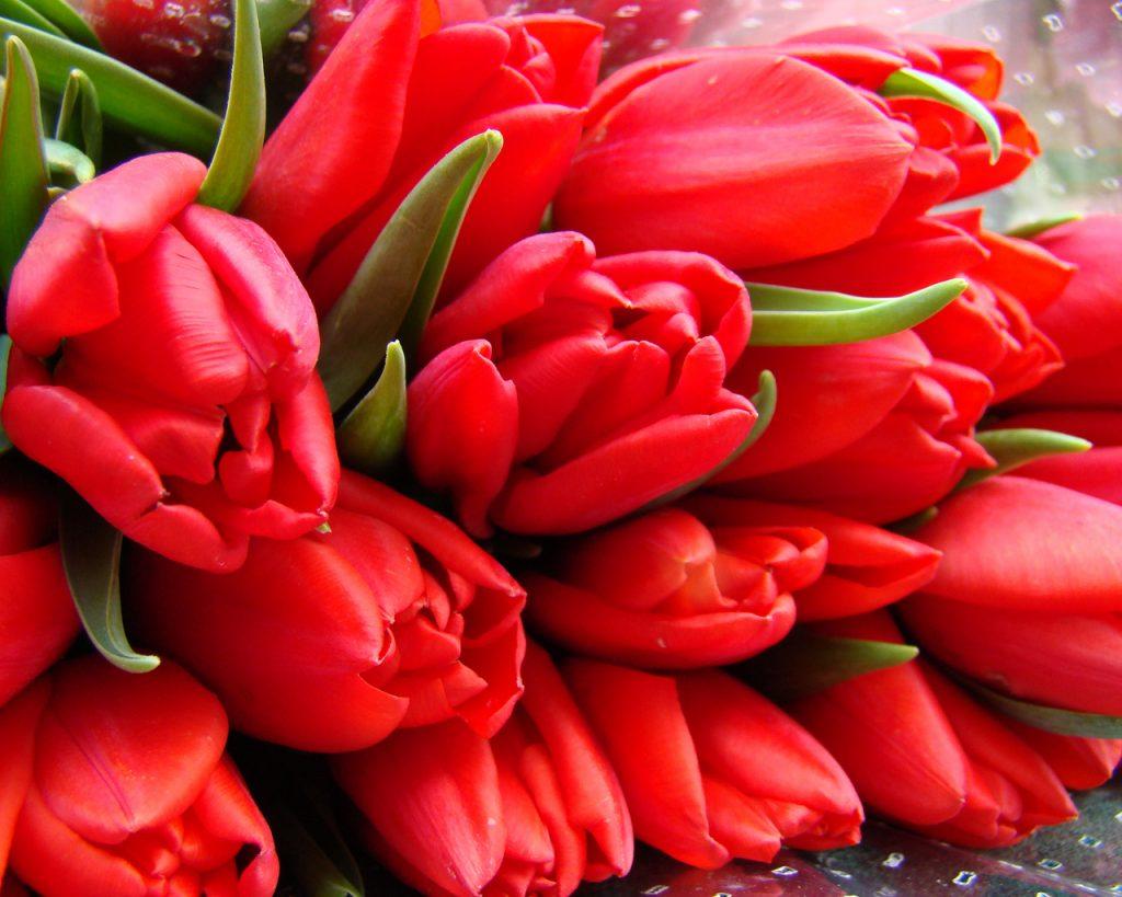9 мая. Письмо деда и охапка красных тюльпанов