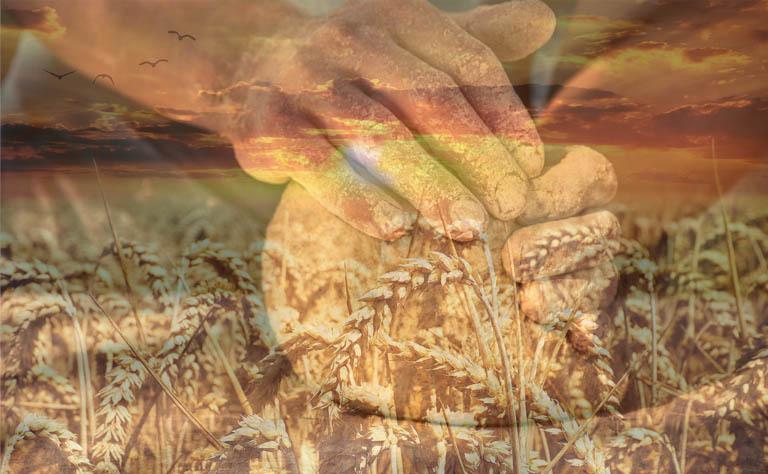 Пекарь с любовью может делать руками хлеб, но мука для хлеба была перемолота на элеваторе из зерна, выращенного фермером...