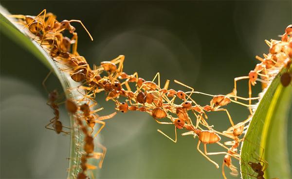 Жизнь муравьев в природе - уникальное явление. Муравейник представляет собой единый организм, без которого отдельные особи выжить не способны.
