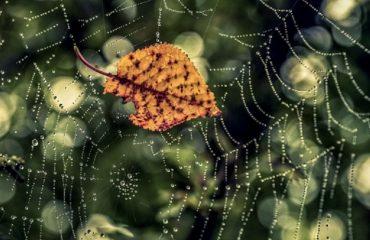 Крупным планом фотограф запечатлел блестящую в капельках дождя паутину, к которой прилип пожелтевший лист. Так и в жизни, порой, мы попадаем в паутину своих привязанностей и не можем из нее выбраться.